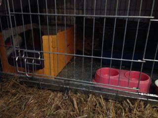 katten-buitenplaats2