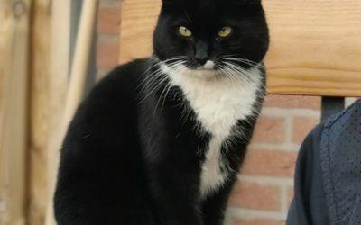 Zwart witte kat japie